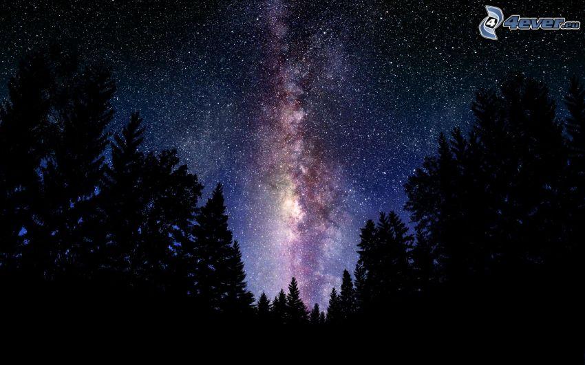 nočná obloha, hviezdna obloha, silueta lesa, Mliečna cesta