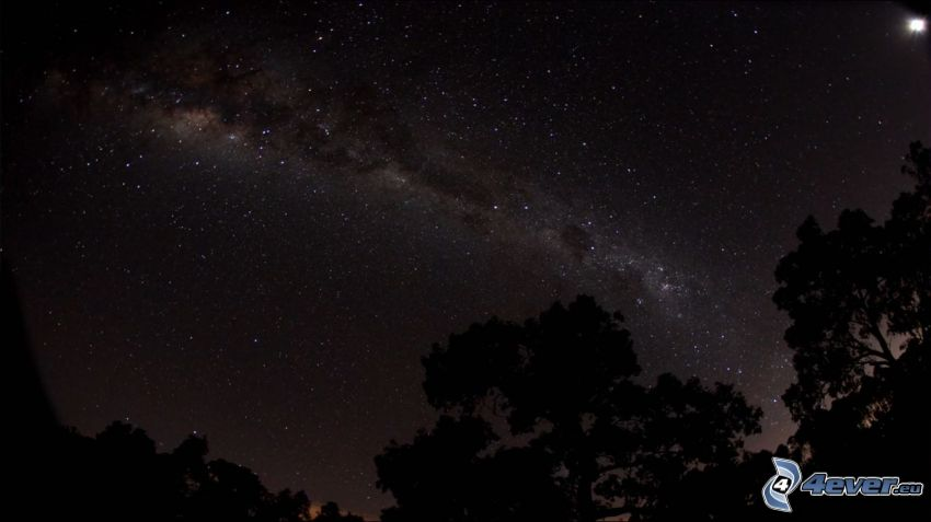 nočná obloha, hviezdna obloha, siluety stromov