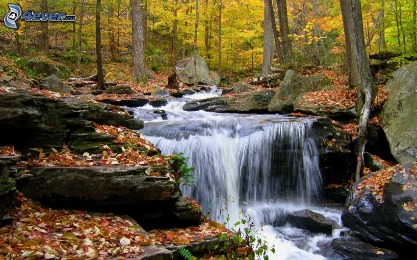 vodopády, les, jesenné listy