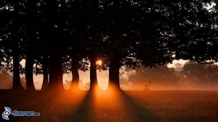 západ slnka v lese, jeleň, siluety stromov