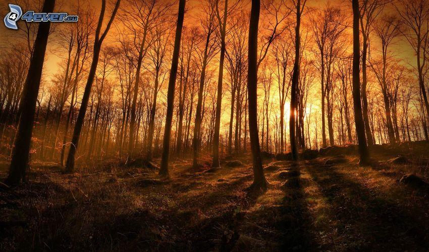 západ slnka v lese, oranžová obloha