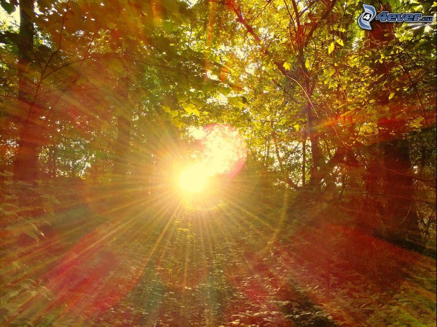 západ slnka v lese, slnečné lúče