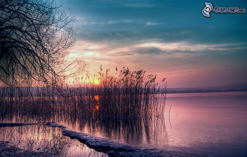 západ slnka za jazerom, vysoká tráva, večerná obloha