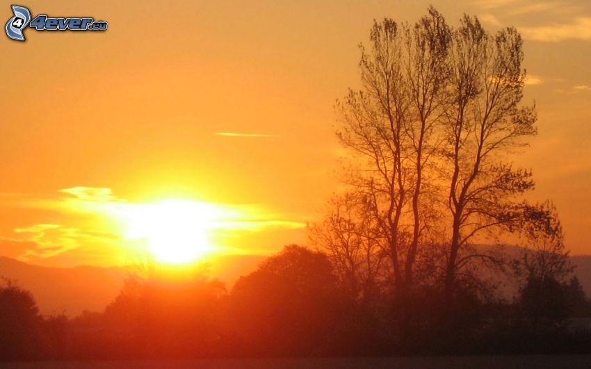 západ slnka za kopcom, silueta stromu, oranžová obloha
