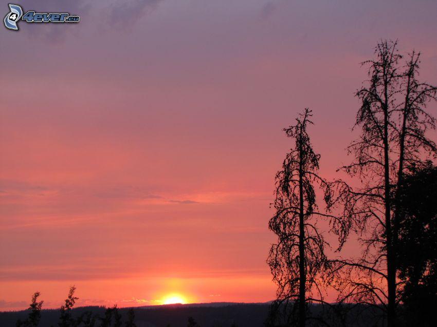 západ slnka za lesom, fialová obloha, siluety stromov
