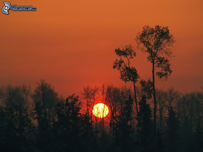 západ slnka za lesom, siluety stromov, oranžová obloha