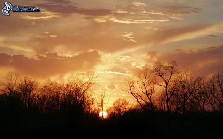 západ slnka za lesom, večerná obloha, siluety stromov