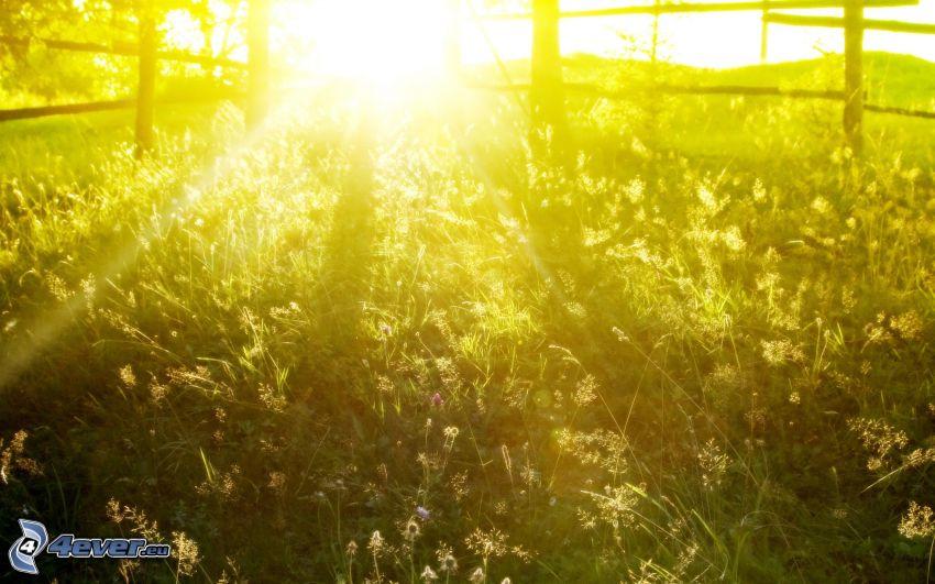západ slnka za lúkou, drevený plot, slnečné lúče
