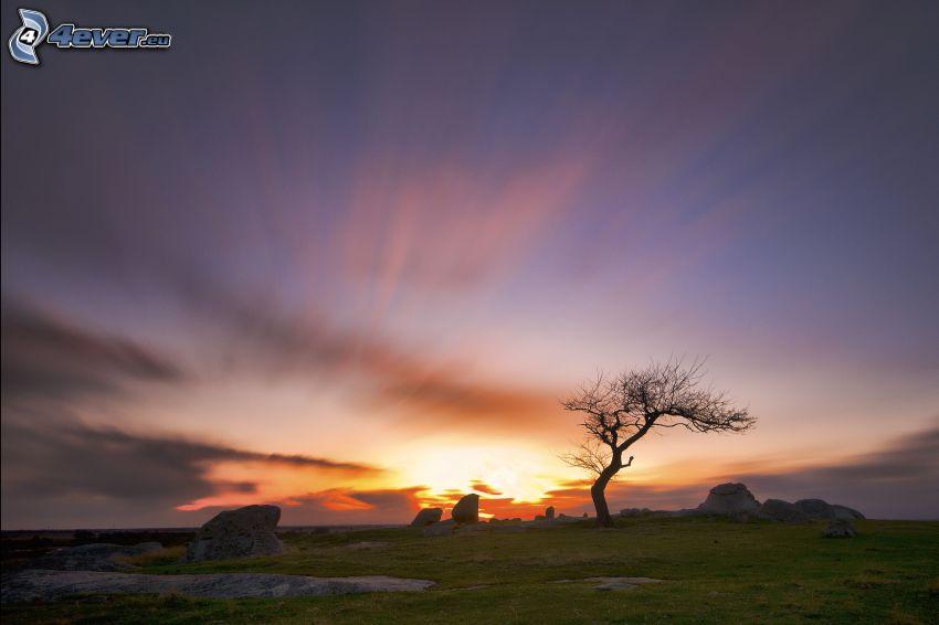západ slnka za lúkou, osamelý strom, skaly