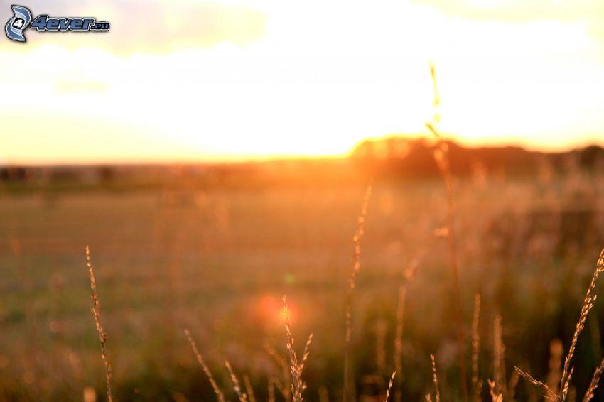 západ slnka za lúkou, vysoká tráva