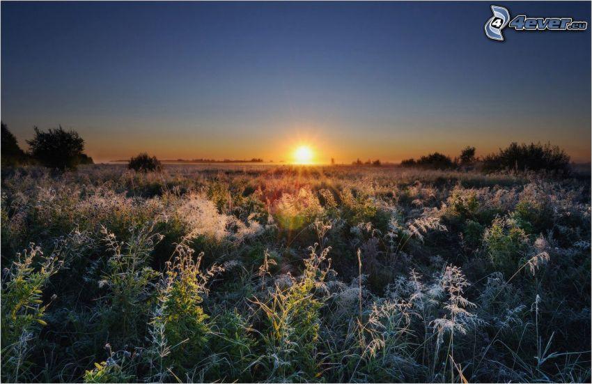 západ slnka za poľom, vysoká tráva