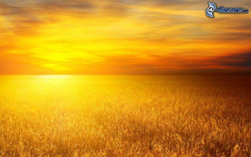 západ slnka za poľom, žltá obloha
