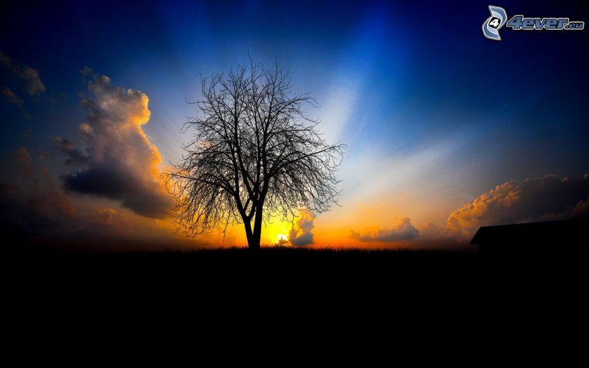západ slnka za stromom, slnečné lúče, silueta stromu, oblaky