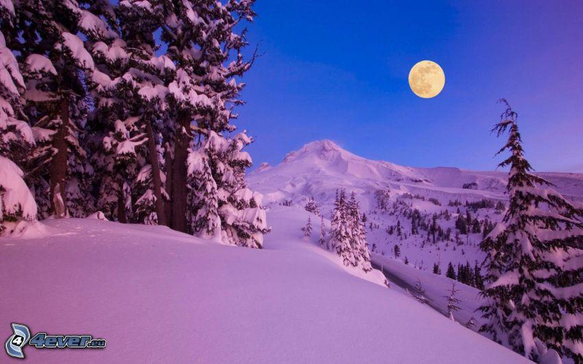 zasnežená krajina, mesiac
