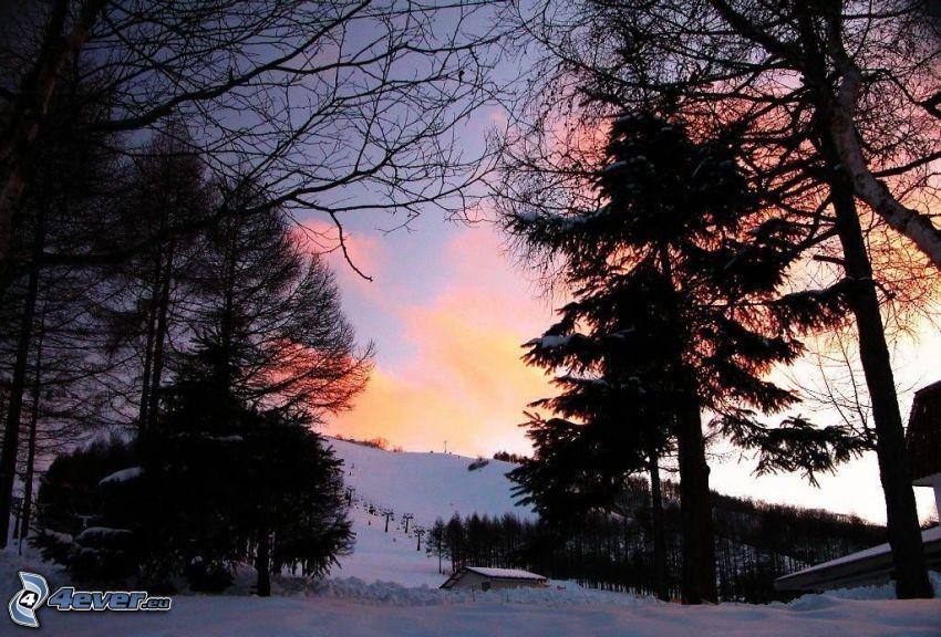 zasnežená krajina, siluety stromov, západ slnka