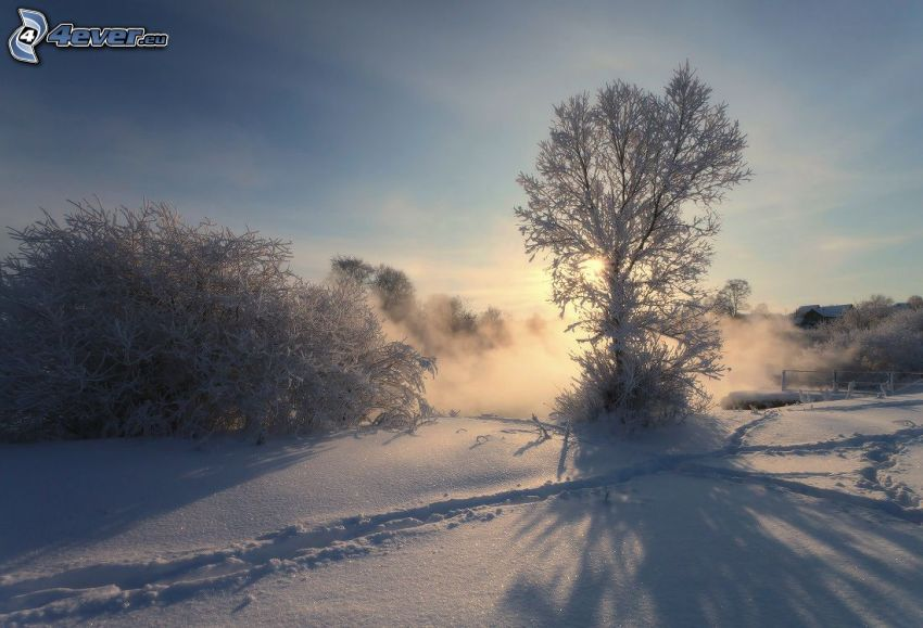 zasnežená krajina, stopy v snehu, západ slnka za stromom