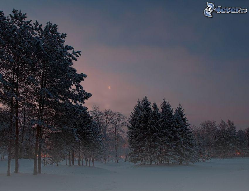 zasnežené stromy, po západe slnka, večer