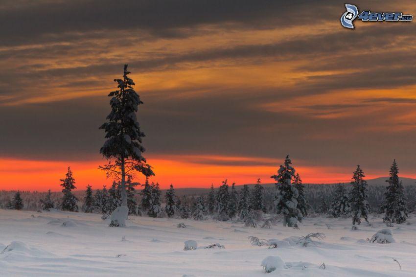 zasnežený les, oranžová obloha