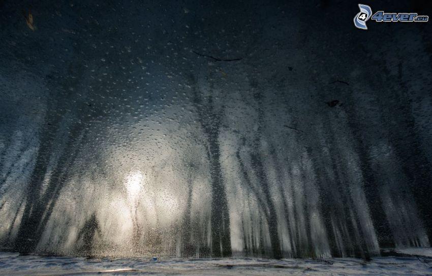 zasnežený les, zarosené sklo