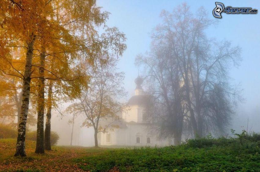 žlté stromy, brezy, kostol, hmla