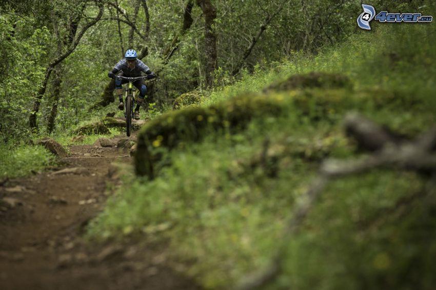 mountainbiking, lesná cesta
