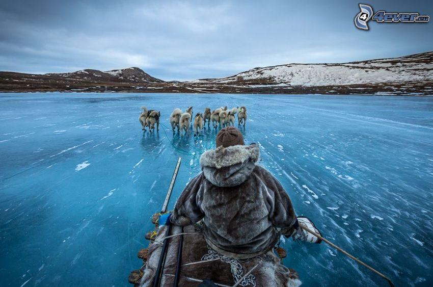 psí záprah, zamrznuté jazero, HDR