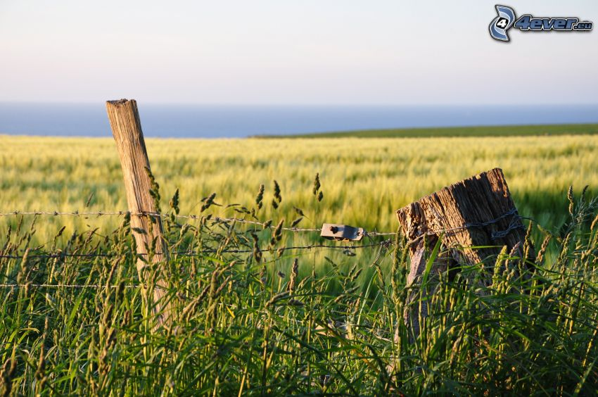drevený plot, drôt, pole