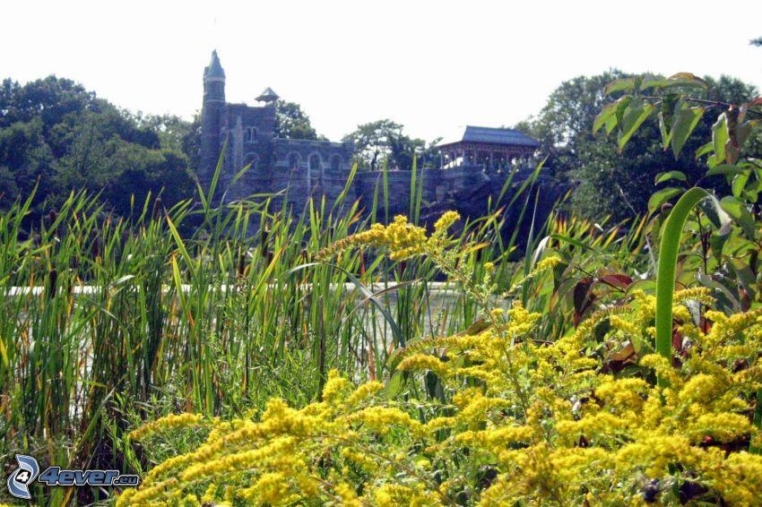 Belvedere Castle, vysoká tráva