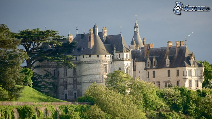 Château de Chaumont, stromy