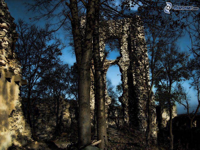 zrúcanina, hrad, stromy