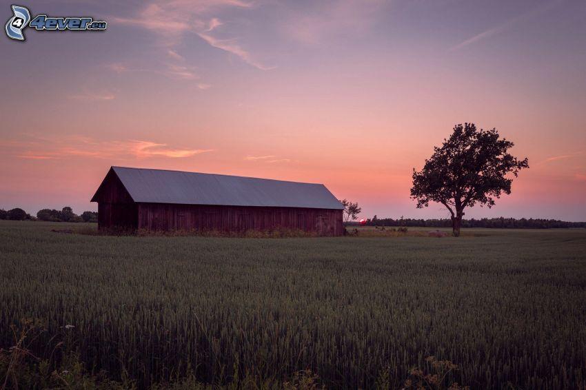 maštaľ, pšeničné pole, osamelý strom, po západe slnka, večer