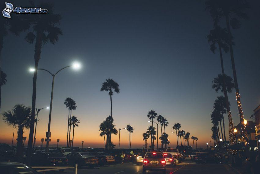 nočná cesta, dopravná zápcha, pouličné osvetlenie, palmy