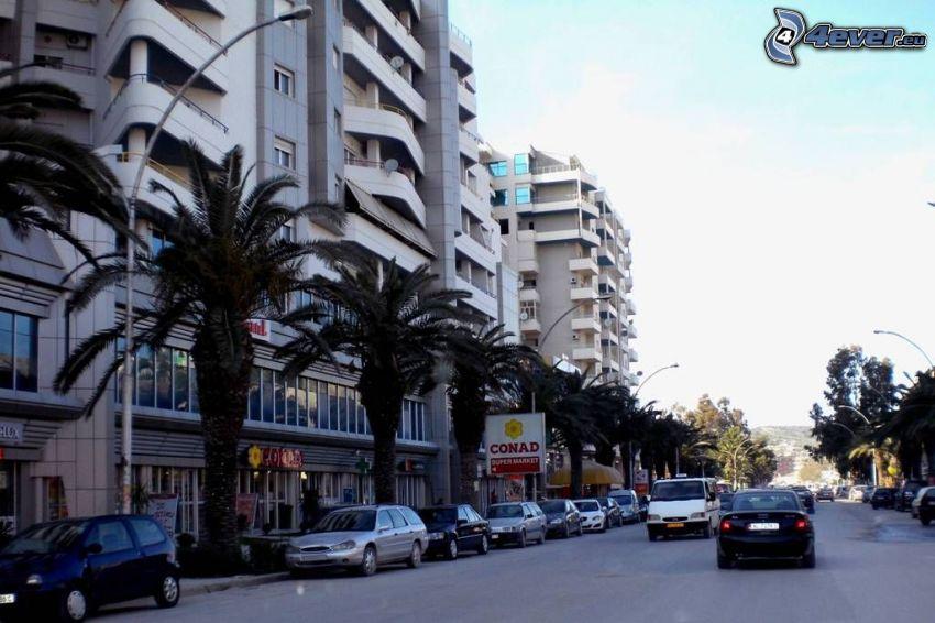 Vlora, ulica, palmy