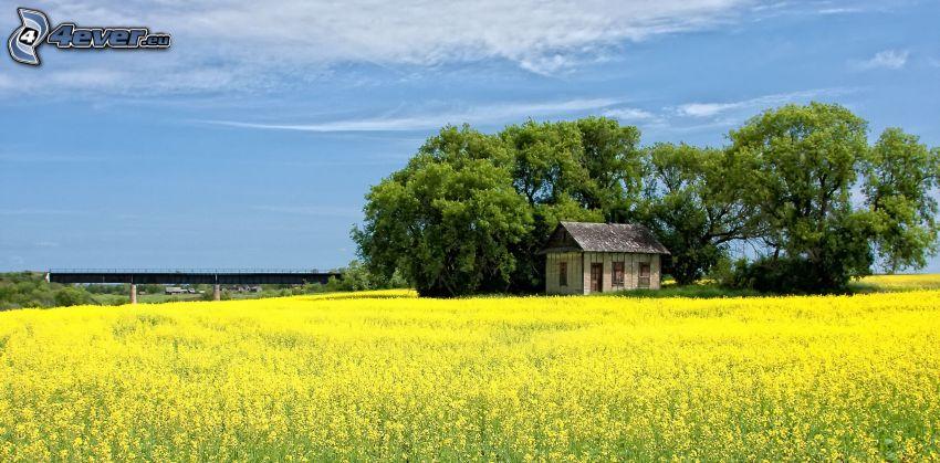 opustený dom, stromy, repka olejná, pole, most