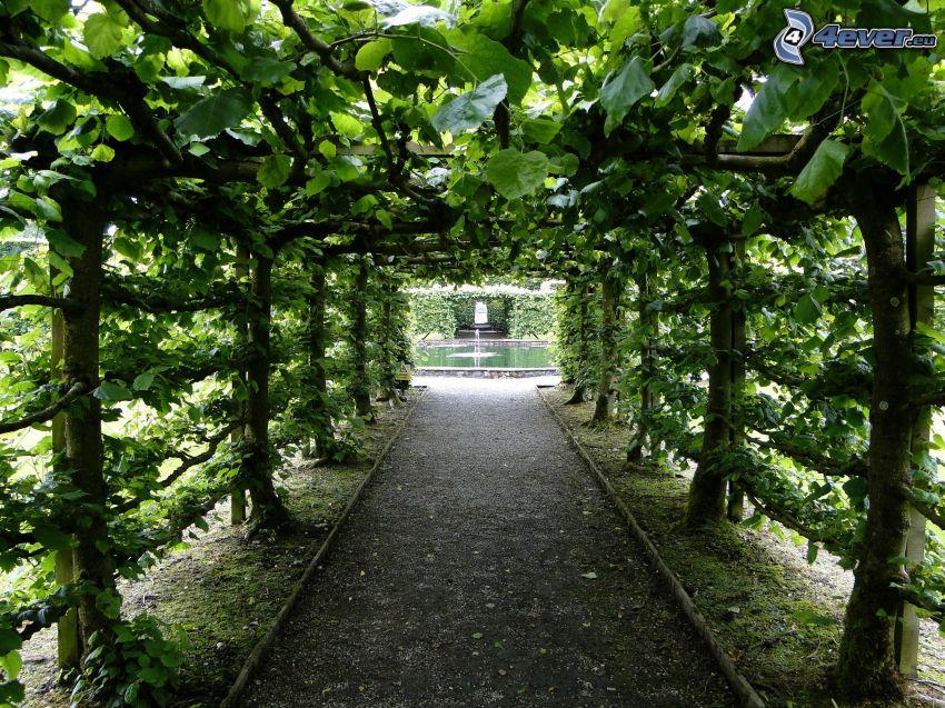 fontána, zelený tunel