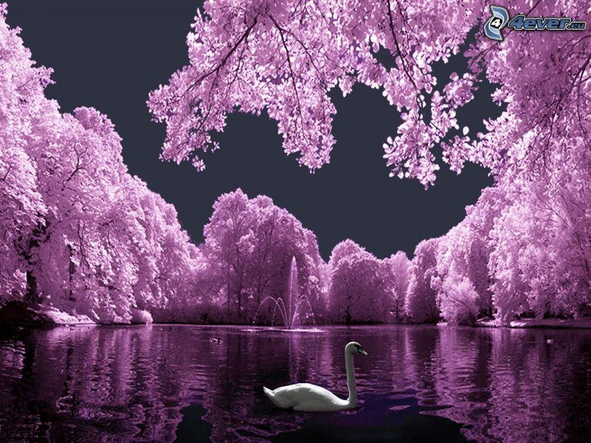 labuť, jazero, fialové stromy, fontána, park