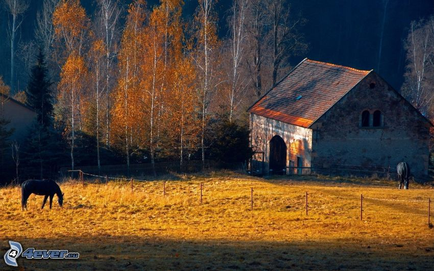 stajňa, čierne kone, jesenné stromy