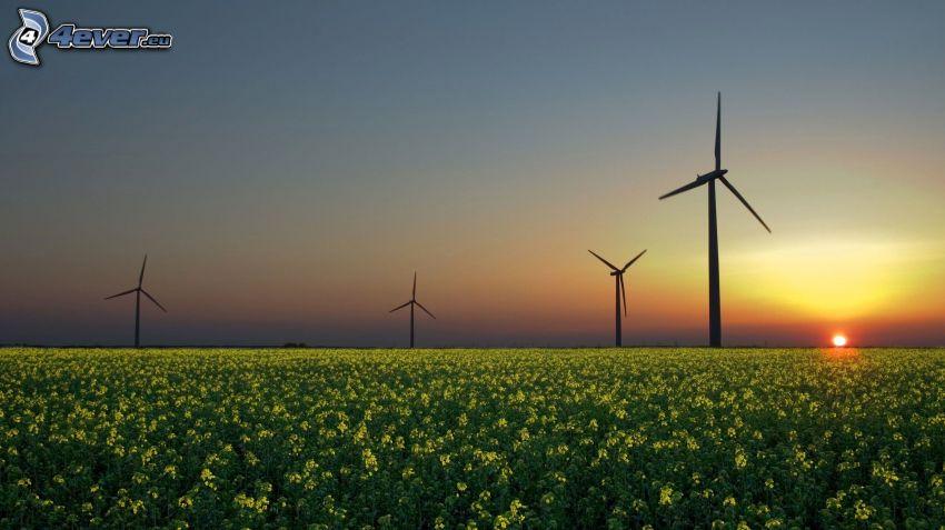 veterné elektrárne pri západe slnka, pole, repka olejná