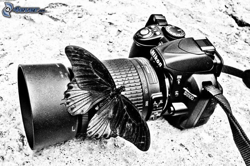 fotoaparát, motýľ, čiernobiele