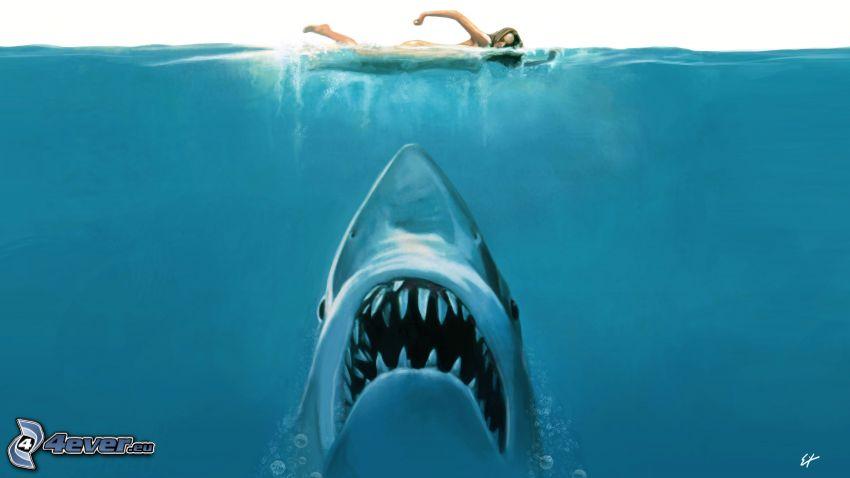 Jaws, plávanie, žena, žralok