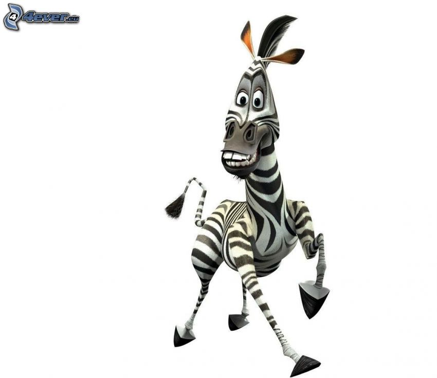 zebra z madagaskaru