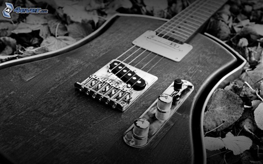elektrická gitara, jesenné listy