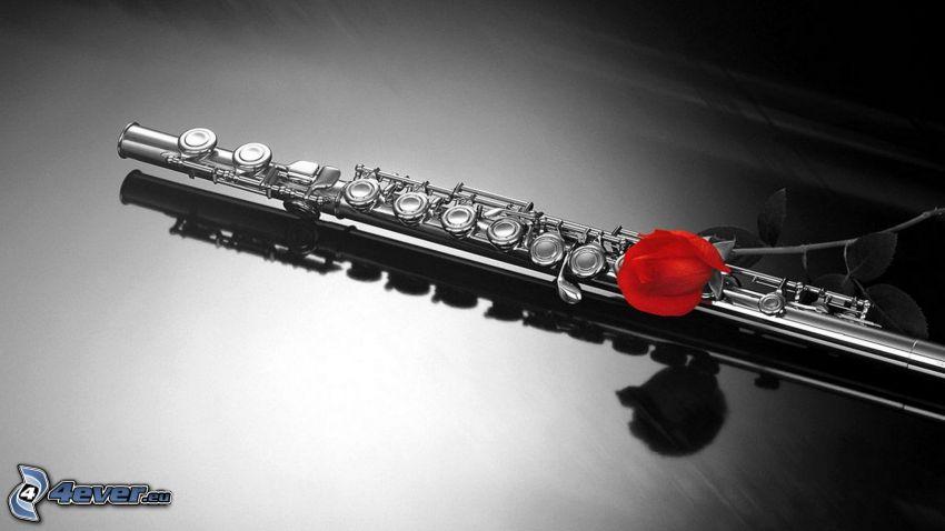 flauta, červená ruža
