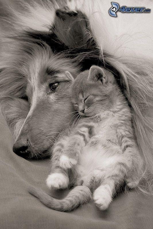 pes a mačka, spiace mačiatko, priateľstvo, pohoda