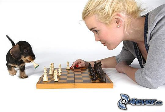 šach, blondínka, šteniatko