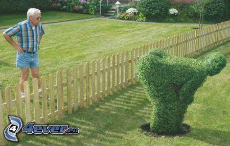socha zo živého plotu, sused, krík, zadok, drevený plot