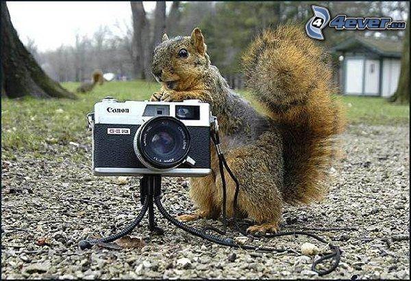 veverička, fotoaparát