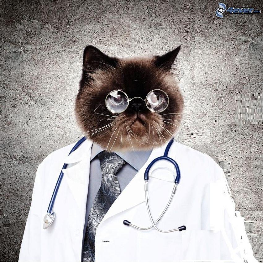 doktor, mačka