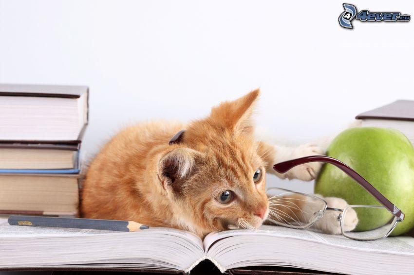 hnedá mačka, okuliare, kniha, ceruzka