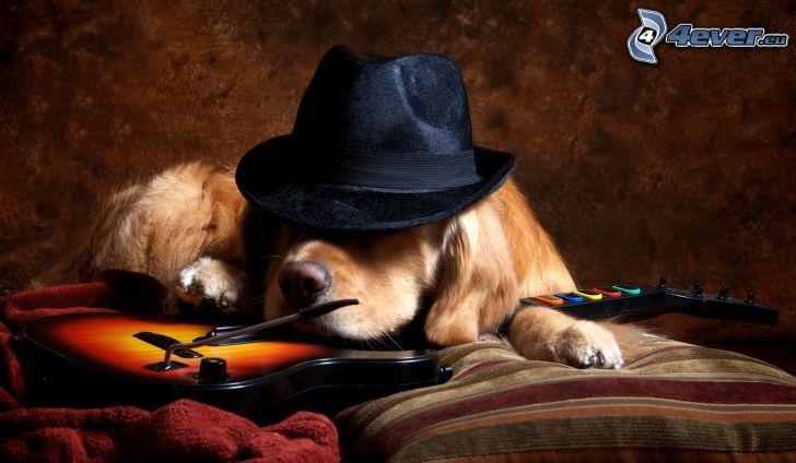 hnedý pes, klobúk, elektrická gitara